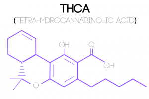 An illustration of a Tetrahydrocannabinolic Acid (THCA) molecular structure